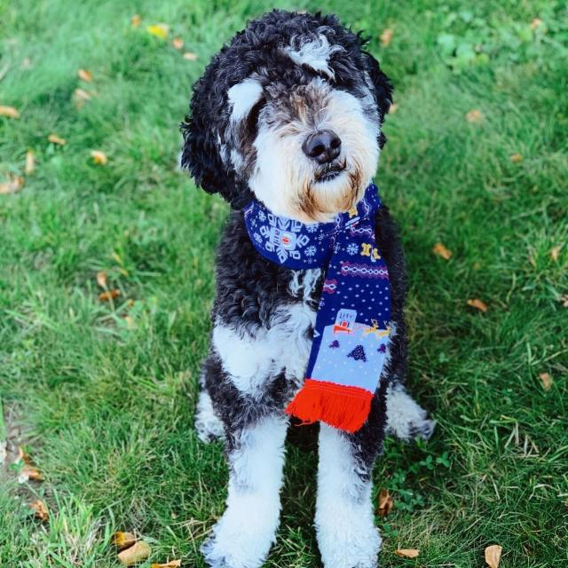 Even your furry friend wants @millerlite ugly sweater gear.  Get this and more at the Ugly Sweater launch party 11/21.